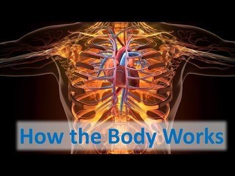 How Does Lantus Work In The Body?