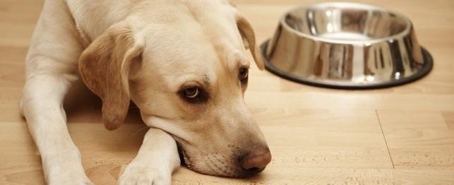 How Do You Check A Dog's Blood Sugar?