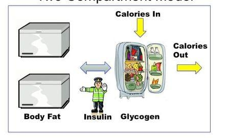 How To Fix Physiological Insulin Resistance