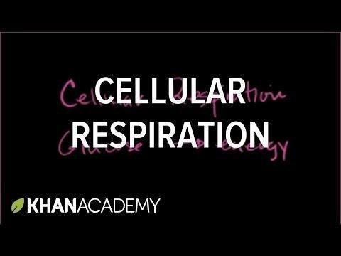 Biology Ch 4.3 - Cellular Respiration