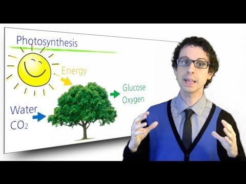 What Makes Glucose In The Body?