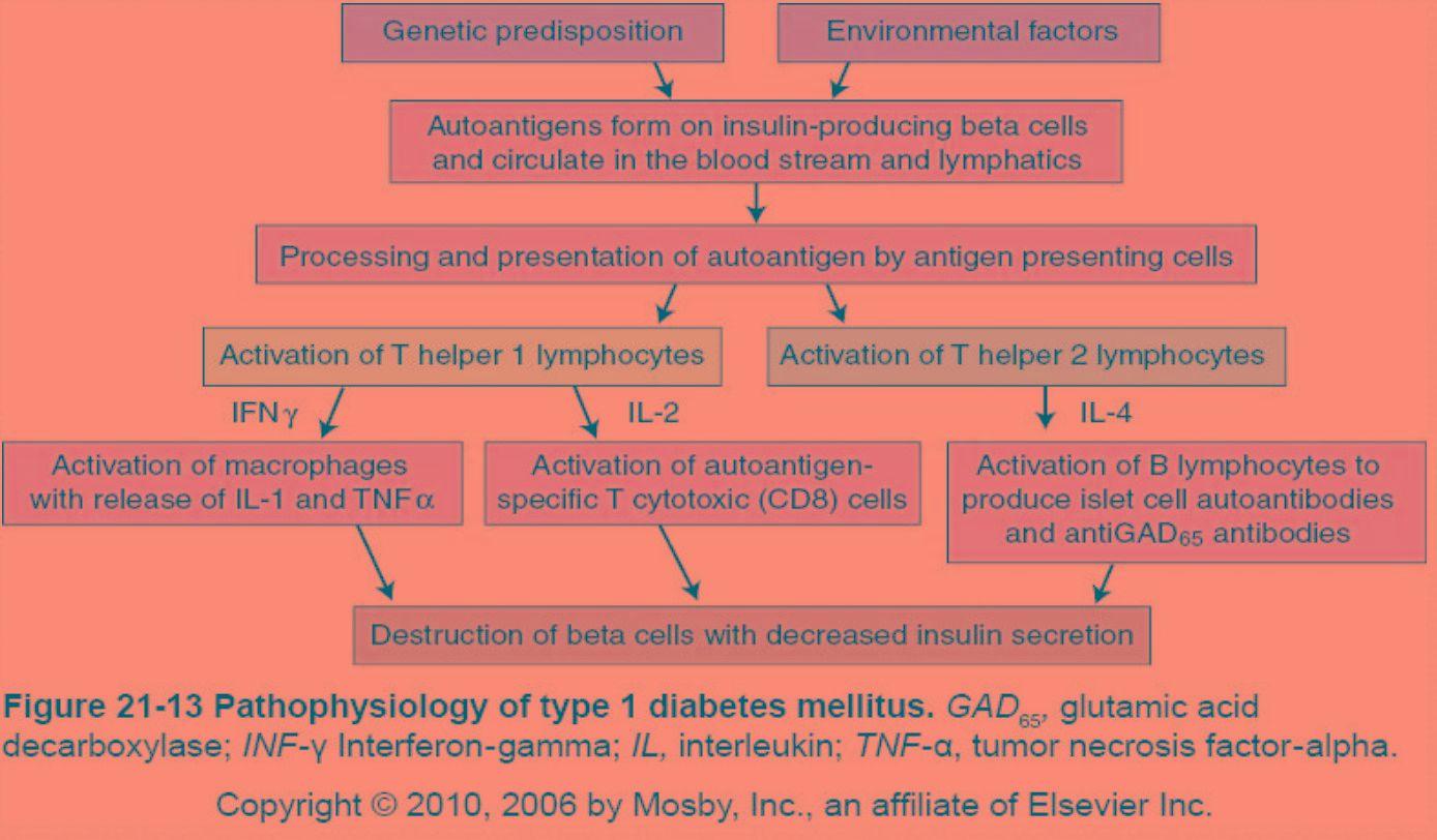 Type 1 Diabetes Pathophysiology