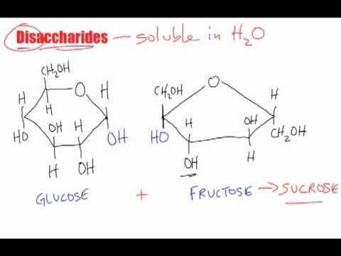 Disaccharide - New World Encyclopedia