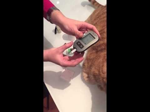 What Is Normal Blood Sugar For A Cat