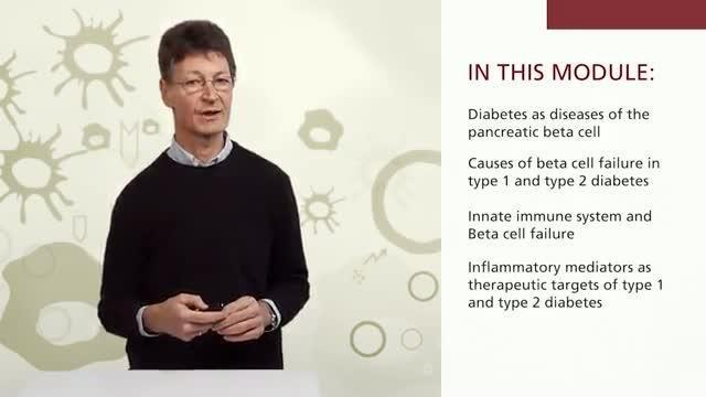Beta Cell Destruction Type 2 Diabetes
