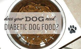 Does Your Dog Need Diabetic Dog Food?