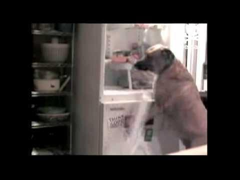 Dog Insulin Left Out Of Refrigerator