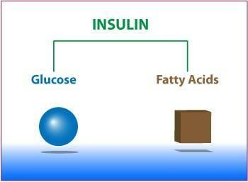 Why Insulin Resistance Occurs In Pcos
