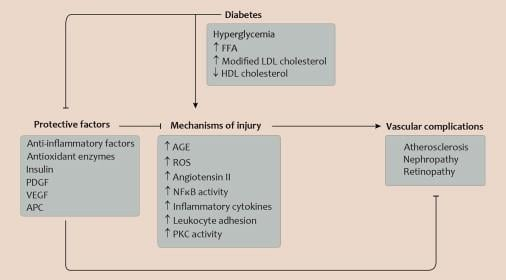 Review Vascular Complications Of Diabetes: Mechanisms Of Injury And Protective Factors