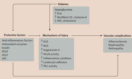 Why Does High Blood Sugar Damage Blood Vessels?