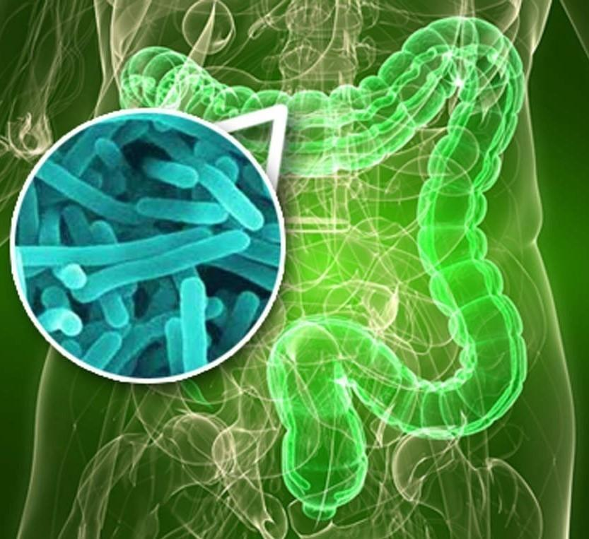 Gut Bacteria And Type 2 Diabetes