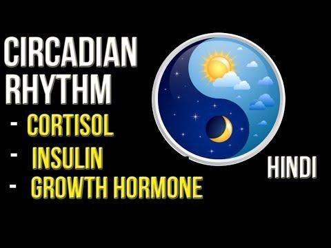 Circadian Clock Controls Insulin And Blood Sugar In Pancreas
