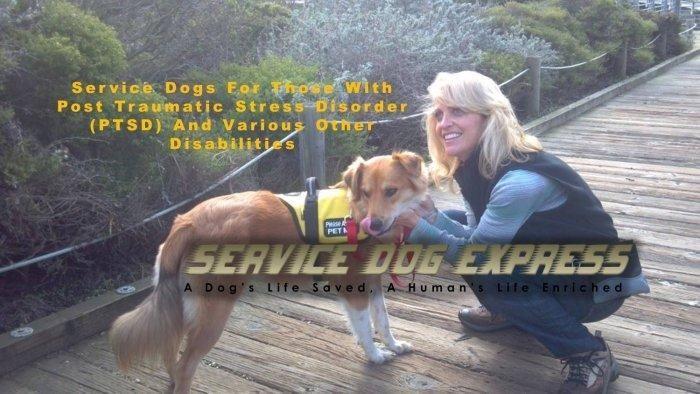 Diabetic Service Dog Grants