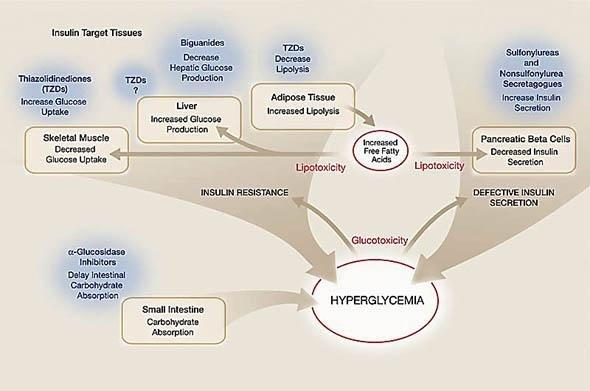 Oral Antihyperglycemic Therapy For Type 2 Diabetesscientific Review
