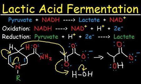 Lactic Acidosis Alcohol