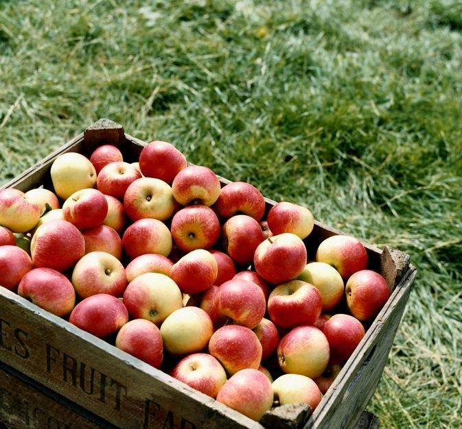 Do Apples Raise Your Blood Sugar?