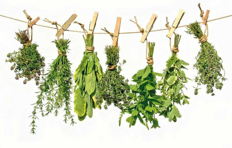 10 Magnficas Plantas Para Tratar La Diabetes