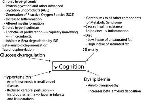 Hyperglycemia And Brain Function