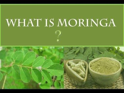 Moringa For Diabetes And Blood Pressure