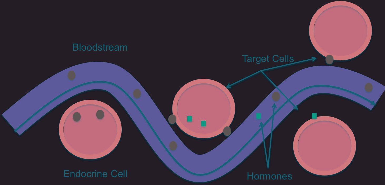 How Insulin And Glucose Are Involved In Cell Communication