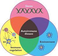 Is Type 2 Diabetes And Autoimmune Disease?