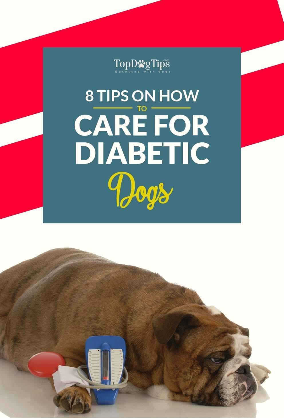 8 Expert Tips On How To Care For A Diabetic Dog