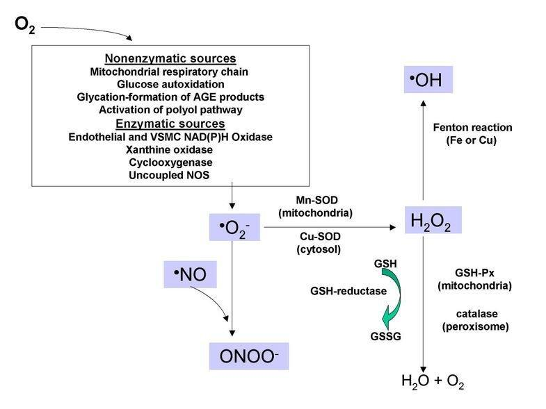 Oxidative Stress And The Use Of Antioxidants In Diabetes: Linking Basic Science To Clinical Practice