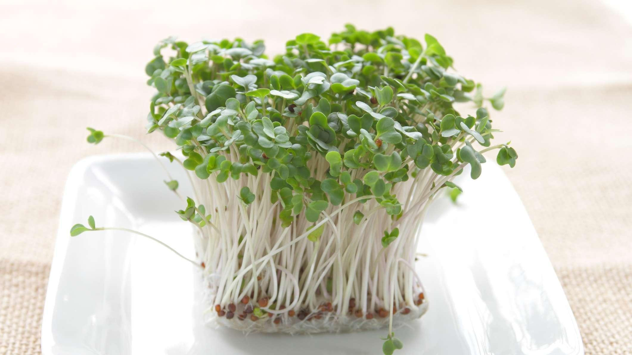 Could Broccoli Sprouts Help Treat Type 2 Diabetes?