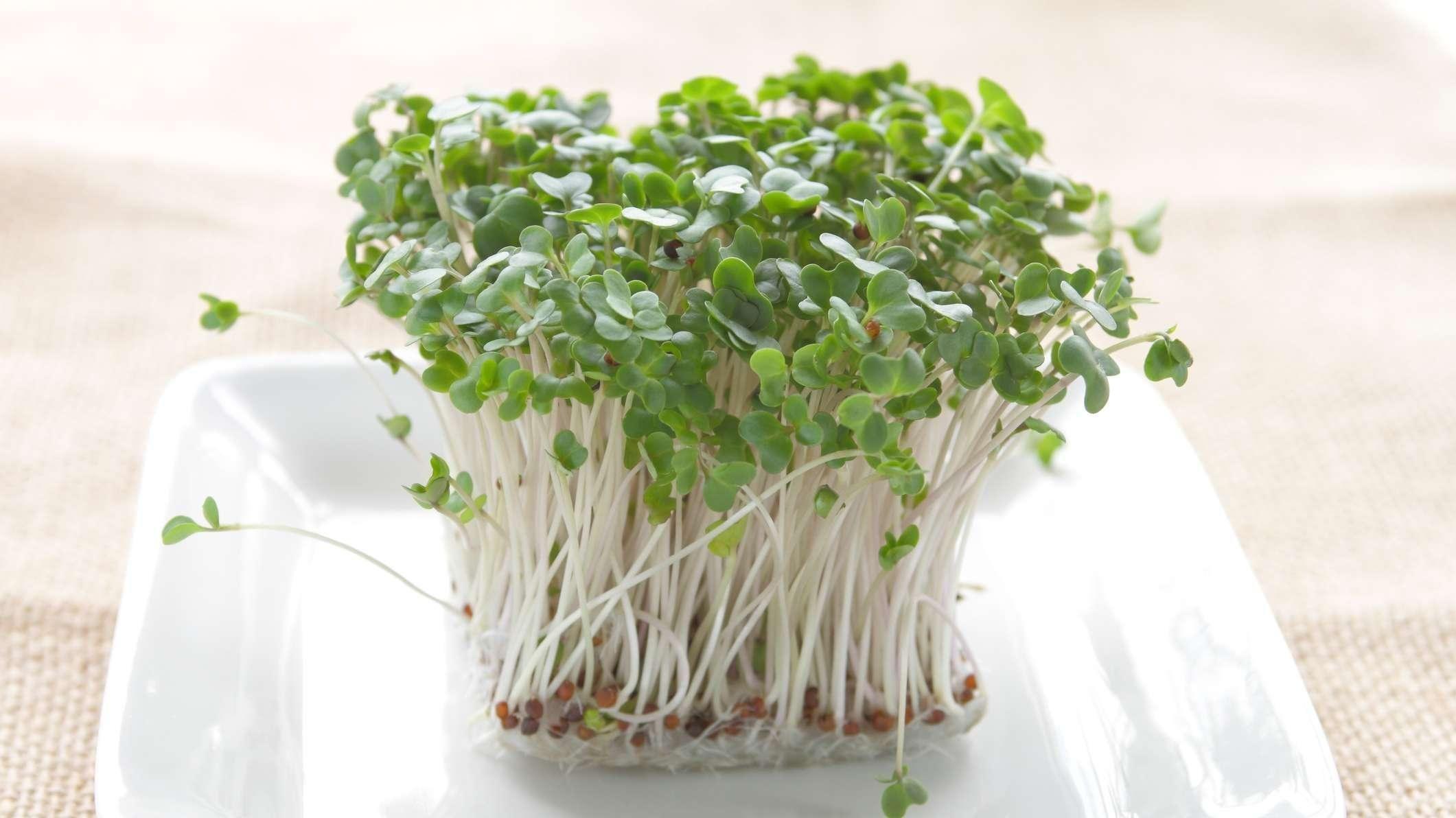 Broccoli Sprouts Diabetes