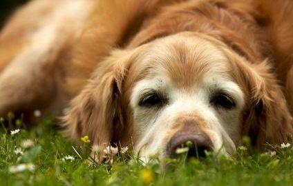 What Are The Symptoms Of High Blood Sugar In Dogs?