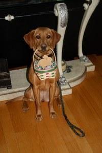 Diabetic Alert Dog Scent Training