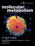 Branched-chain Amino Acid Restriction In Zucker-fatty Rats Improves Muscle Insulin Sensitivity By Enhancing Efficiency Of Fatty Acid Oxidation And Acyl-glycine Export - Sciencedirect