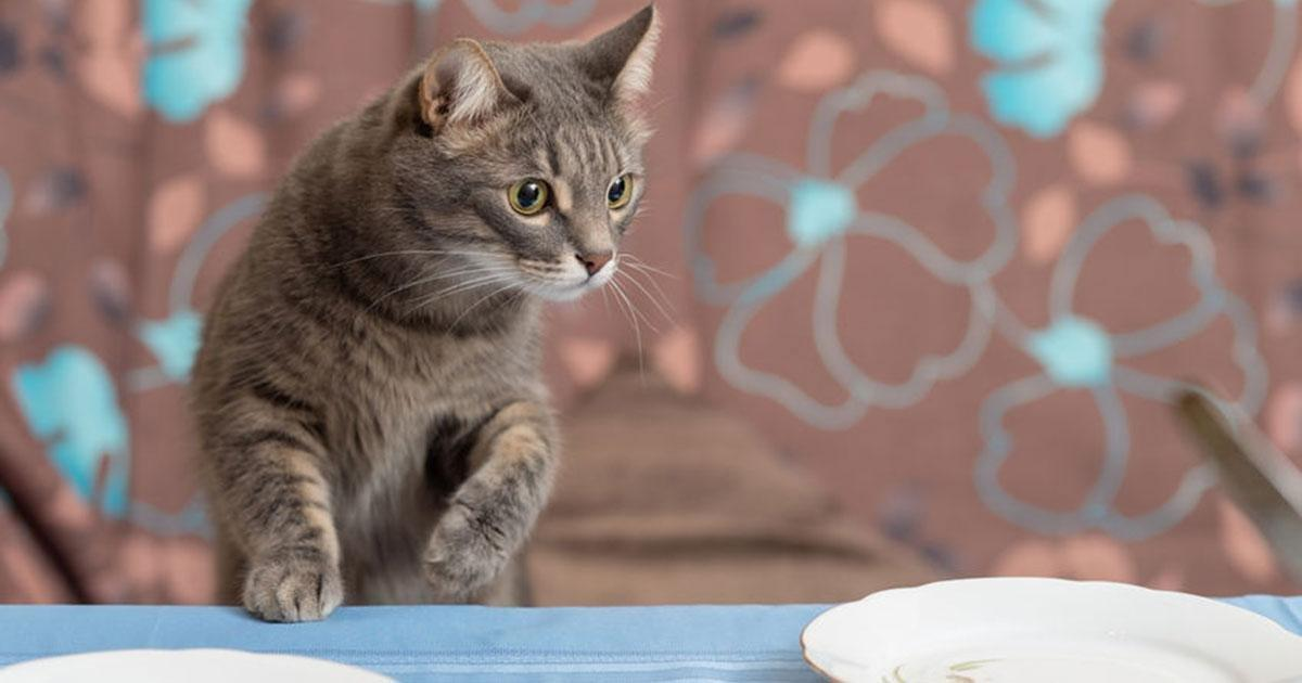 Feeding Schedule For A Diabetic Cat