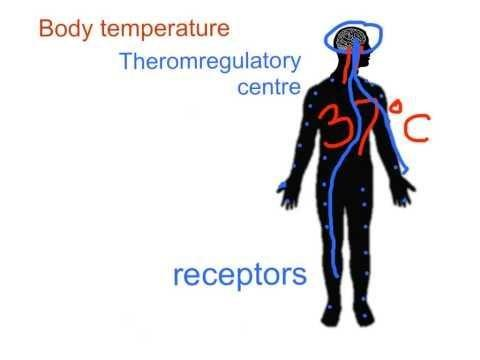 Temperature And Blood Glucose