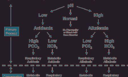 Respiratory Acidosis And Metabolic Alkalosis At The Same Time