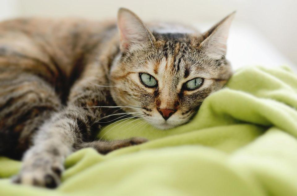 What Causes A Cat To Get Diabetes?