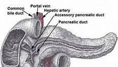 Pancreas Health Supplements