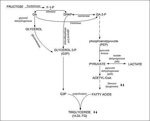 Can Fructose Be Converted To Glucose?