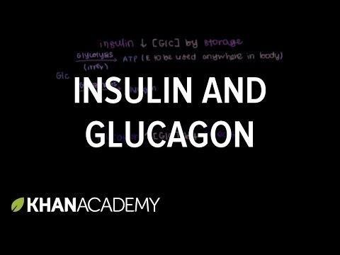What Do Insulin And Glucagon Have In Common Quizlet