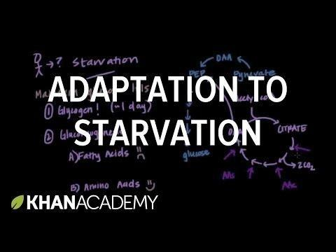 Starvation Acidosis Symptoms