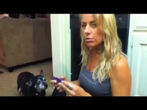 Dog Diabetes Test Kit