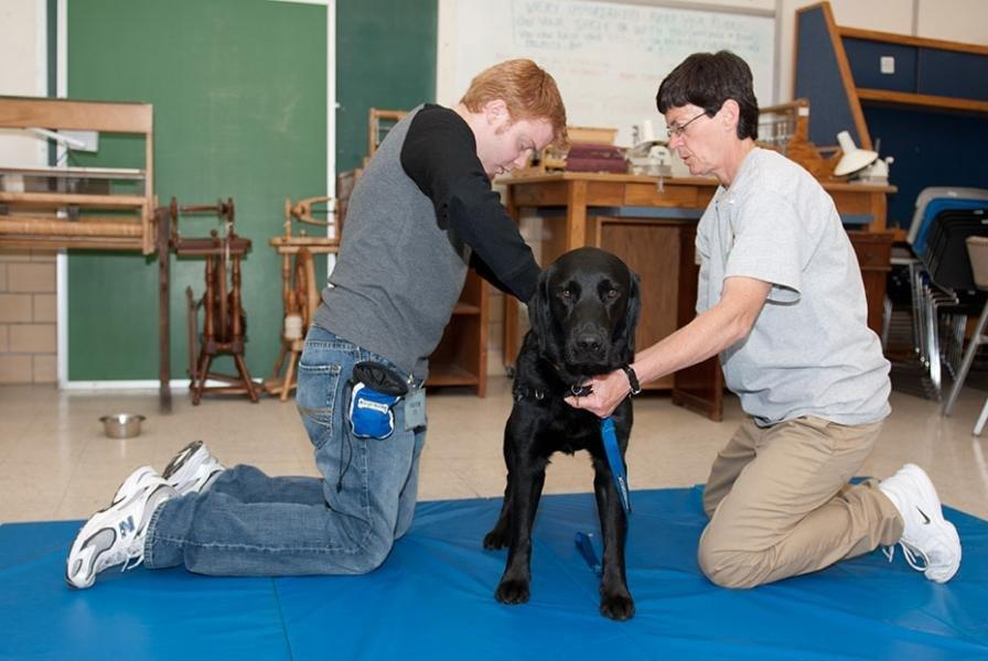 Can You Train Your Dog To Be A Diabetic Alert Dog?