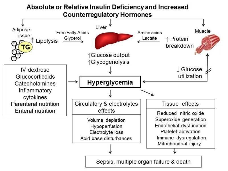 Management Of Diabetes And Hyperglycemia In Hospitalized Patients