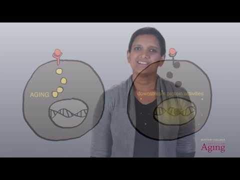 Explain How A Problem With Insulin Receptors What Affect The Ability To Achieve Homeostasis