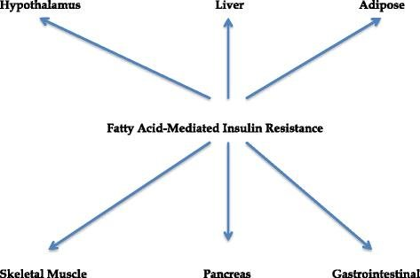 The Role Of Fatty Acids In Insulin Resistance