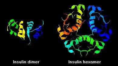 Amino Acid Sequence Of Human Insulin A Chain