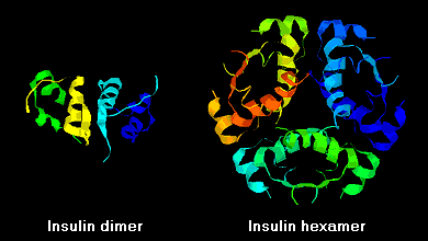Insulin Secondary Structure