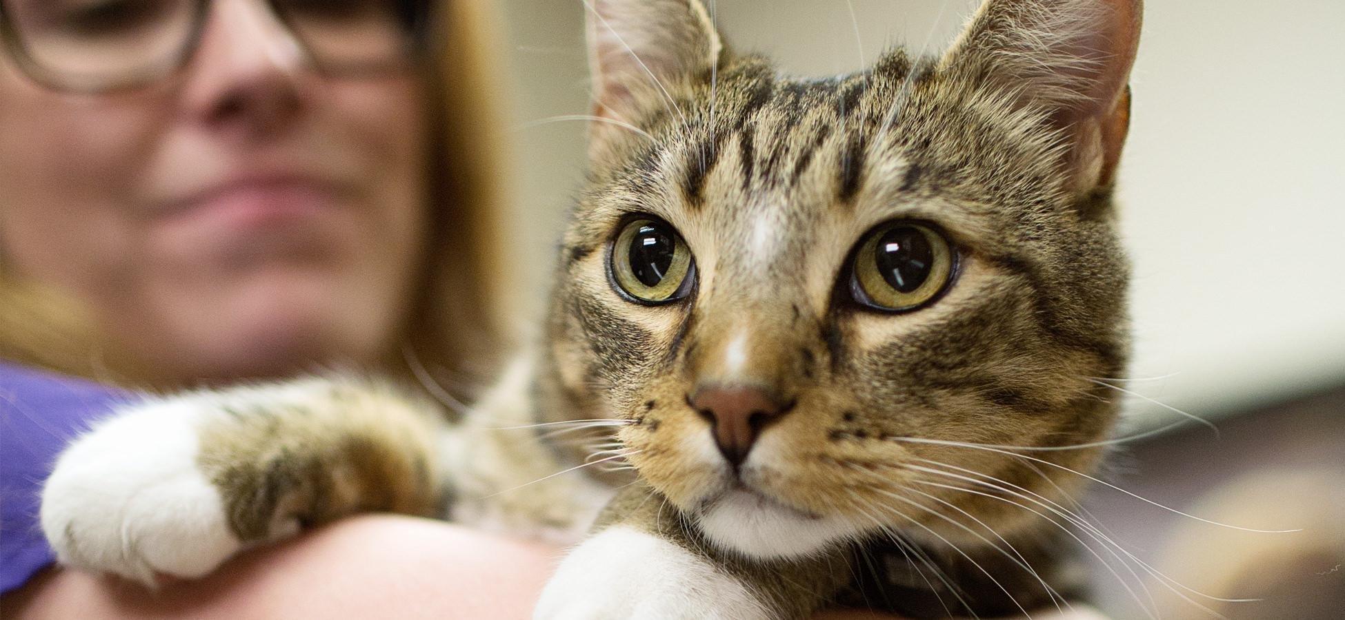 Understanding Diabetes In Cats