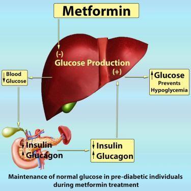 A1c 6.1 Metformin