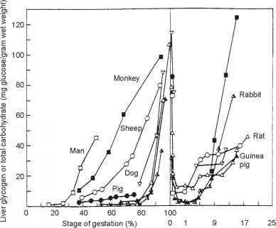 Fetal Effects Of Diabetic Ketoacidosis
